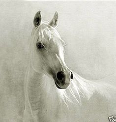 Realism art Oil painting nice animal white horse head on canvas - Realism Art - Ideas of Realism Art White Horse Painting, Horse Oil Painting, Oil Painting On Canvas, Canvas Art, Painting Art, Painting Gallery, Horse Photos, Horse Pictures, Abstract Animals