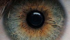 beutiful, camera, eye, iris, macro, macro eye - image #41516 on Favim.