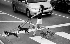 Italian Greyhounds. This will probably be me in the future!