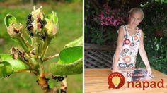 Dôvod, prečo v záhrade nikdy nepoužívam chémiu a aj tak nemám problém s voškami: Učte sa od tejto ženy a budete sa diviť, že ste to neskúsili skôr! Advice, Gardening, Tips, Garten, Lawn And Garden, Horticulture