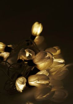 Every Flower is Illuminated Light Set in White