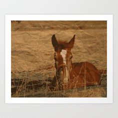 Horse at sunset Art Print by Sonia Marazia - $15.60