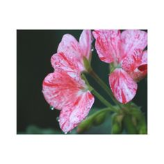 Pink and red speckled flower canvas print