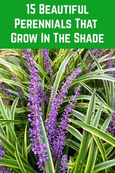 Gardening For Dummies, Organic Gardening Tips, Best Perennials, Fire Pit Patio, Flower Gardening, Edible Garden, Plant Care, Yard Landscaping, Gnomes