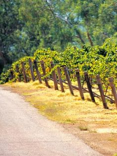 Great wine drives: Swan Valley, Western Australia