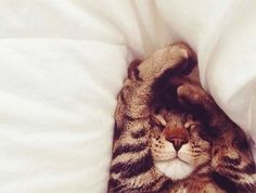 Tabby cats are the cutest. Baby Animals, Funny Animals, Cute Animals, Crazy Cat Lady, Crazy Cats, I Love Cats, Cute Cats, Kittens Cutest, Cats And Kittens