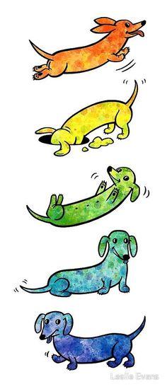 Dachshund Clube - Leslie Evan #dachshund Clube - Leslie Evans