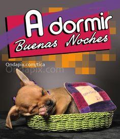 A dormir #animales #perros
