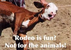 Scare me, bruise me, beat me to the ground against my will... said no animal ever! Cows calf rodeo vegan