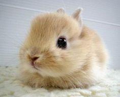 Little Bunny Fufu | Cutest Paw