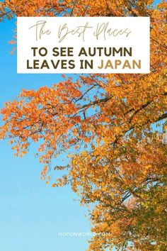 Planning a trip to Japan in autumn? Read my detailed Japan autumn guide which includes everything you need to know to make your Japan autumn itinerary a success - From when to go and what to pack for Japan, to the best places to visit in Japan during fall. #Japanautumn #falltravel #falljapan #beautifulplacesinjapanfall #autumncolorsjapan #autumnleavesjapan