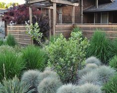 asian landscaping with ornamental grasses : Outdoor Landscaping With Ornamental Grasses. landscaping ideas,landscaping ornamental grasses,ornamental grass landscape,ornamental grasses for landscaping,outdoor landscaping design Outdoor Landscaping, Front Yard Landscaping, Landscaping Ideas, Natural Landscaping, Fence Design, Garden Design, Trellis Design, House Design, Landscape Architecture