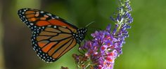 Phipps Conservatory - Butterfly Forest Returns April 20 #phipps