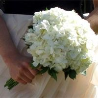 White Hydrangea Wedding Bouquet / Products / Local Florist in San Diego CA Rose Bridesmaid Bouquet, Rose Wedding Bouquet, Wedding Flowers, White Hydrangea Bouquet, White Hydrangeas, Spring Wedding Bouquets, Bridal Bouquets, White Roses Wedding, Bouquet Images