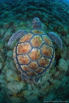 Every sea turtle has markings as distinct as fingerprints on their shells. In an attempt to save the turtles from slaughter, rescue groups are etching their shells with tools that 'ruin' them for collectors. YEA FOR THE TURTLES!