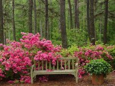 spring in the park Outdoor Furniture, Outdoor Decor, Park, Spring, Creative, Home Decor, Pictures, Corner Dining Nook, Flowers
