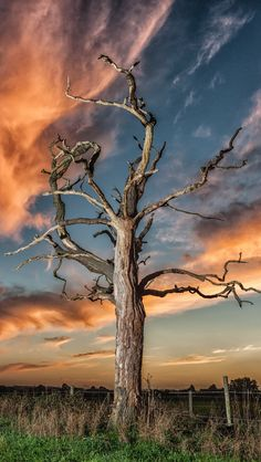 Sunset of a dead tree Explore is part of Tree photography - ringflash head on tripod at 45 degrees to the left about 25 feet from dead tree Processed in LightRoom CC and NIK Collection Colour EFEX Pro 4 Foto Picture, Lone Tree, Unique Trees, Tree Photography, Tree Art, Belle Photo, Beautiful World, Landscape Paintings, Beautiful Pictures