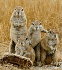squirrel gang pic