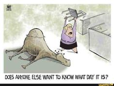 Does Anyone Else Want To Know What Day It Is wednesday hump day humpday hump day camel wednesday quotes happy wednesday wednesday quote happy wednesday quotes Hump Day Quotes, Hump Day Humor, Happy Wednesday Quotes, Wednesday Humor, Monday Humor, Morning Quotes, Thursday Funny, Friday Funnies, Wacky Wednesday