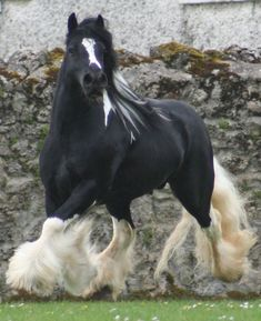 Hustler -Gypsy Vanner Stallion (love the bonus floof) Big Horses, Horses For Sale, Horse Love, White Horses, Most Beautiful Horses, All The Pretty Horses, Beautiful Creatures, Animals Beautiful, Animal Original