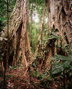 Walking trees, Tambopata National Park, Peru