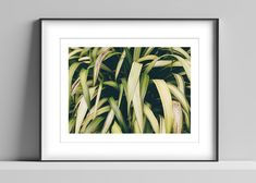 Limited edition signed photographic print by Anna Partington - 'Phormium' - Large grass plant in Devon Mount Board, Pink Rose Flower, Black Leaves, Trees To Plant, Devon, Anna, Frame, Artist, Plants