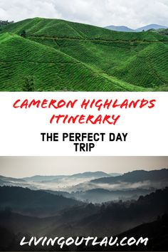 Europe Travel Tips, Asia Travel, Travel Guides, European Travel, Travel Destinations, Malaysia Itinerary, Malaysia Travel Guide, Japanese Travel, Cameron Highlands