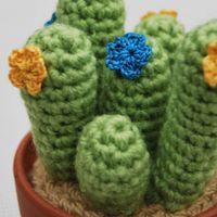 cactus tubitos 3