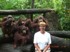 Jen and I did this; rather disconcerting having the orangs making fun of us behind our backs!