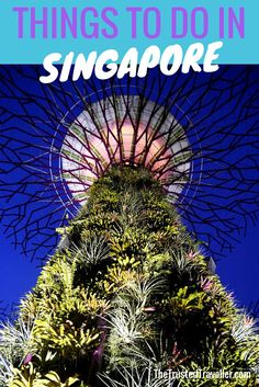 Supertrees at Gardens by the Bay - Things to Do in Singapore - The Trusted Traveller
