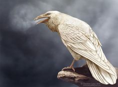 White Raven - Semi-realism by CarolinaLang Raven And Wolf, Quoth The Raven, Crow Art, Raven Art, Raven Pictures, Animal Pictures, Rare Albino Animals, Raven Tattoo, Deer Tattoo