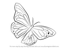 Learn How to Draw a Monarch Butterfly (Butterflies) Step by Step : Drawing Tutorials Butterfly Sketch, Cartoon Butterfly, Butterfly Illustration, Butterfly Art, Monarch Butterfly, Butterflies, Butterfly Painting Easy, Butterfly Watercolor, Insect Coloring Pages