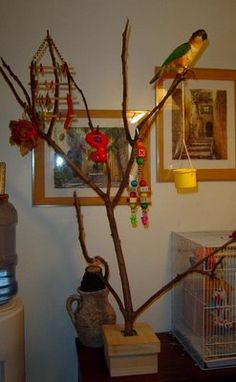 Parrot play gym made from a wood box base and natural branches Budgie Toys, Parrot Toys, Parrot Perch, Bird Perch, Bird Aviary, Parrot Play Stand, Diy Bird Cage, Diy Bird Toys, Bird Stand