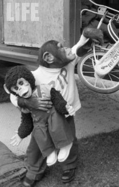 Zip was found! Zip - Zippy the Chimp - Howdy Doody - Chimp Chimapanzee Monkey Monkey See Monkey Do, Ape Monkey, Orangutans, Chimpanzee, Monkey Humor, Animal Pictures, Cool Pictures, Howdy Doody, Boomer Generation