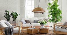 Las plantas son salud ¡y son estilo!