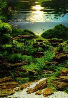 21 really surreal fish aquarium designs by Takashi Amano. aquarium 21 really surreal fish aquarium designs by Takashi Amano. - All pets Leo hgfdeeeed Aquarien 21 really surreal fish aquarium designs by Takash Aquarium Design, Diy Aquarium, Nature Aquarium, Planted Aquarium, Aquarium Aquascape, Aquascaping, Takashi Amano, Aquarium Landscape, Freshwater Aquarium