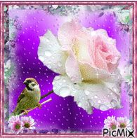 See the PicMix A rose full of raindrops. belonging to StellaStai on PicMix. Good Morning Beautiful Pictures, Rain Drops, Beautiful Flowers, Teddy Bear, Rose, Creative, Animals, Weddings, Anime Animals