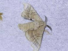 Image result for chrysalis made from fabric