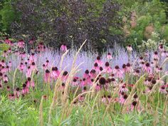 Piet Oudolf at RHS Wisley - Echinacea and Perovskia (black garden edging) Prairie Planting, Prairie Garden, Meadow Garden, Woodland Garden, Dream Garden, Garden Edging, Garden Borders, Alpine Garden, Design Jardin