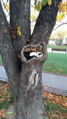 ¡Gatos bebés en un nido de pájaros! Tan hermosa Se parecen más a Ge . - ¡Gatos bebés en un nido de pájaros! Tan hermosa Se parecen más a Ge … – - Cute Kittens, Ragdoll Kittens, Cute Little Animals, Cute Funny Animals, Beautiful Cats, Animals Beautiful, Photo Chat, Funny Animal Pictures, Crazy Cats