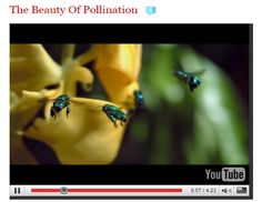 Absolutely incredible video on pollination from filmmaker Louie Schwartzberg on Ted Talks  (YouTube).