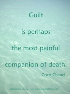 Dealing with guilt after pet loss