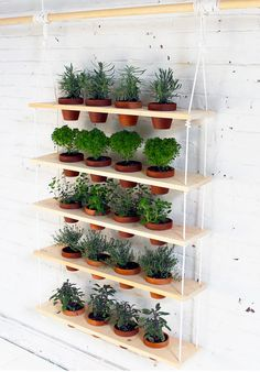 This hanging herb garden will give you more space in your home by using your wall instead of a ledge or table.