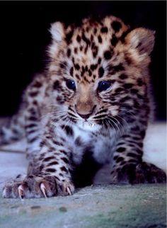 World Animal Day-Five Critically Endangered Mammals | Ian Somerhalder Foundation