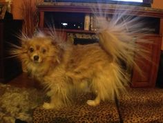 This Is What Happens When My Dog Is Around Static!