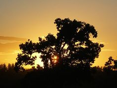 De Vere Carden Park - Sunset, via Flickr.