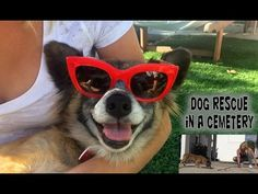 This dog was abandoned in a remote cemetery and guarded by angels until we got there. - YouTube