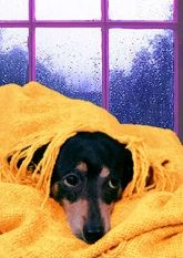 Fantastic musical greeting cards featuring the colorful and hilarious singing of Lucy Lou and her friends! Musical Cards, Black And Tan Dachshund, Get Well Cards, Musicals, Singing, Greeting Cards, Hilarious, Colorful, Friends