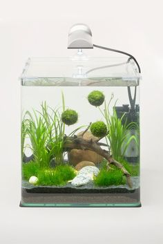 Moss balls and drift wood look like a perfect place for water fairies to live.
