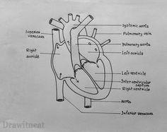 Simple Heart Diagram label | 5th Grade Science | Human ...